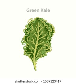 Kale - Green Salad, Leaf Cabbage. Vegetable organic food. Trendy product for healthy nutrition.