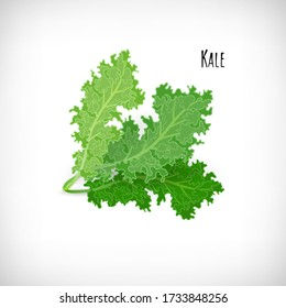 Kale salad leaves isolated on white background. Fresh ingredient for salad in flat style. Lettering Kale. Healthy organic vegetarian food vector Illustration.