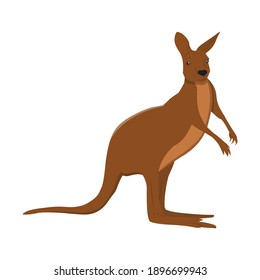 Kangaroo For Animal Vector Illustration