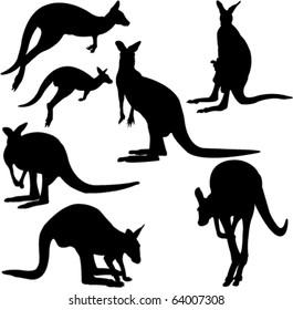 kangaroo - vector