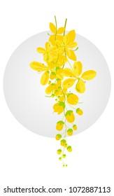 Kani Konna (Cassia fistula) Vishu vector, Konnapoo