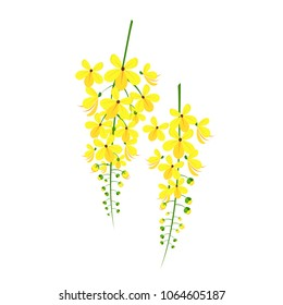 Kanikkonna Flower Vector image in an Isolated background
