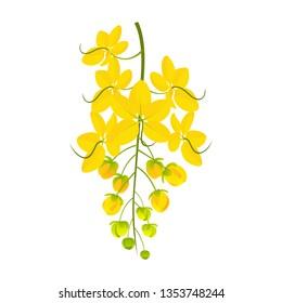 Kanikkonna - golden shower flower - cassia fistula - vector illustration on white background
