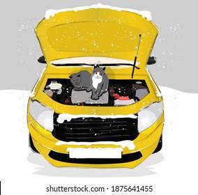 Aracınızı çalıştırmadan kaputa vurun. hit the hood. cats get cold in winter. the cat may die. cat day. dünya kediler günü. sıkışan kedi. kışın kediler. sığınmak. çaresizlik. tehlike. hayvan haklari