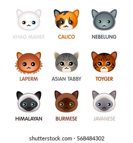 Kawaii cat breeds head icons, set V