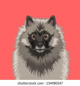 Keeshond, The buddy dog