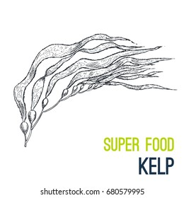 Kelp. Super food hand drawn sketch vector illustration.