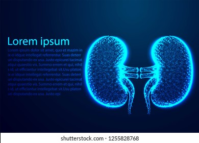 Kidney Human Anatomy. form lines and triangles, point connecting network on blue background. Illustration vector