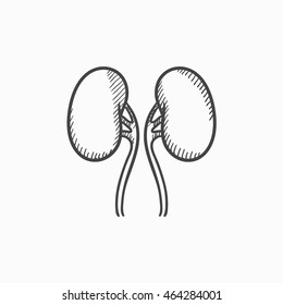 Kidney vector sketch icon isolated on background. Hand drawn Kidney icon. Kidney sketch icon for infographic, website or app.