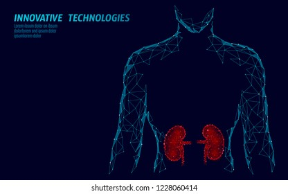 Kidneys internal organ men silhouette 3d low poly geometric model. Urology system medicine treatment. Future science technology polygonal geometric wire mesh vector illustration