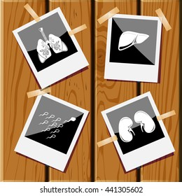 kidneys, liver, spermatozoon, lungs. Medical set. Photo frames on wooden desk. Vector icons.