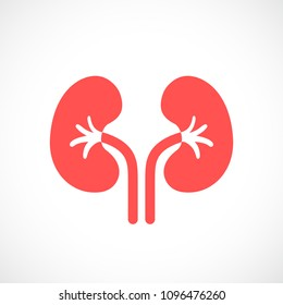 Kidneys vector icon isolated on white background