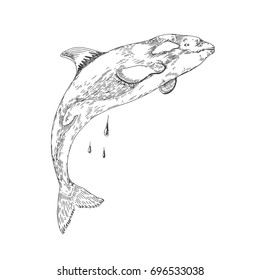Killer Whale. Sea creatures. Vector sketch. Drawn by hand