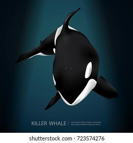 Killer Whale Under The Sea Vector Illustration