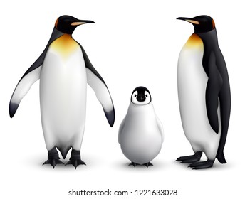King penguin family with chick realistic closeup image with adult birds front and side view vector illustration