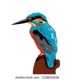 Kingfisher bird vector illustration can be used to design shirts and others