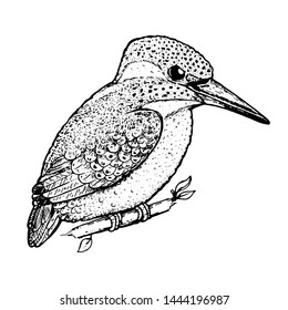 Kingfisher sketch, vector illustration. Hand drawn kingfisher bird. Engraved illustration. Alcedinidae bird sitting on a branch. Hand drawn sketch.