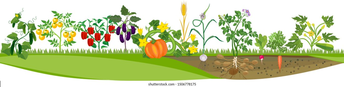 Kitchen garden or vegetable garden with crop of different vegetables. Harvest time