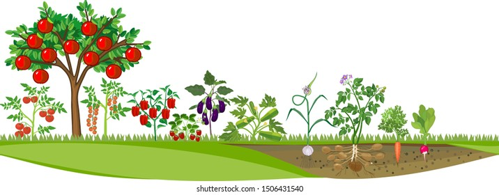Kitchen garden or vegetable garden with different vegetables and apple tree with ripe red fruits. Harvest time