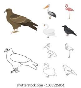 Kite, pelican, flamingo, swan. Birds set collection icons in cartoon,outline style vector symbol stock illustration web.