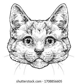 Kitten hand drawn portrait. Vector illustration isolated on white