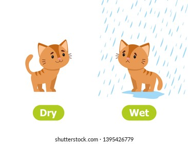 The kitten stands in the rain and without rain. Illustration of opposites dry and wet. Card for teaching aid, for a foreign language learning. Vector illustration on white background, cartoon style.