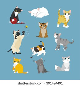 The kittens of various patterns