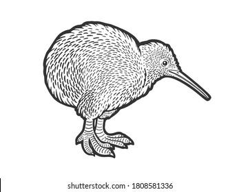 Kiwi bird sketch engraving vector illustration. T-shirt apparel print design. Scratch board imitation. Black and white hand drawn image.