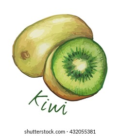Kiwi fruit. Hand drawn watercolor painting. Vector illustration.