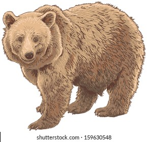 Kodiak Bear Isolated Vector Illustration