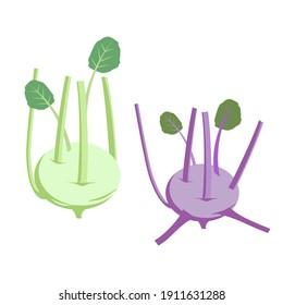 Kohlrabi. Isolated vector image on white background. Kohlrabi cabbage clipart.