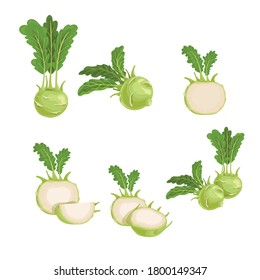 Kohlrabi set. Whole, halved and quarter. Illustrations collection of fresh farm vegetables. Eco turnip cabbage. Vector illustration for markets, prints, packages. Isolated on white background.