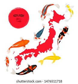 Koi fish and map of Japan on white background, vector illustration