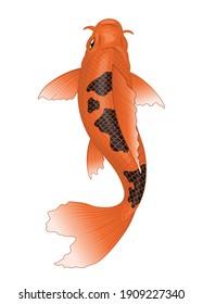 koi fish in orange with black spot color
