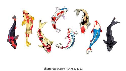 Koi fish set. Japanese carp, Chinese goldfish, Asian pond. Fish concept. Vector illustrations for topics like traditional oriental fishery, aquarium, wealth symbol