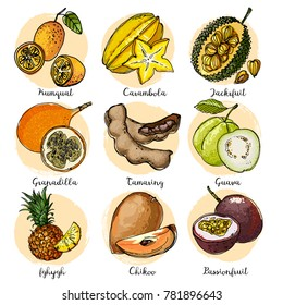 Kumquat, Carambola, Jackfruit, Granadilla, Passionfruit, Guava, Tamaring, Pineapple, durian. Fruits drawn by a line on a white background. Fruits from Thailand. Food sketch lines.