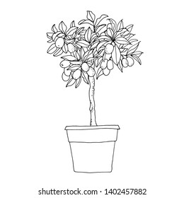 Kumquat. Sketch of a flower in a pot line on a white background. Garden citrus plant. Food