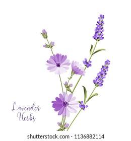 Label with lavender and endive. Bunch of summer flowers on a white background. Botanical illustration in vintage style. Sign lavender herbs in left bottom corner. Vector illustration.