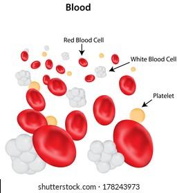 Fantastic White Blood Cells Images Stock Photos Vectors Shutterstock Wiring Database Liteviha4X4Andersnl