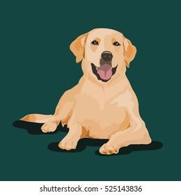 labrador dog at one color background
