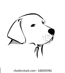 Labrador head 1