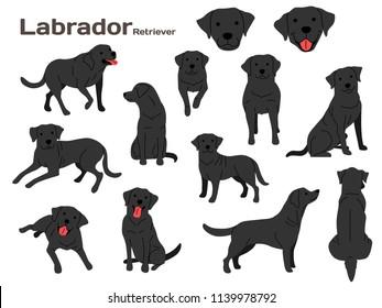 labrador illustration,dog poses,dog breed