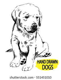 Labrador puppy sitting. Drawing by hand, sketch.