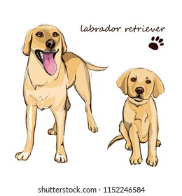 Labrador retriever adult dog and a puppy. Colorful dogs illustration in vector.