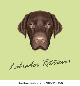 Labrador Retriever Dog portrait. Vector illustrated portrait of Chocolate Labrador on green background.