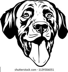 Labrador Retriever Lab dog breed face head isolated pet animal domestic pet canine puppy purebred pedigree hound portrait peeking paws smiling smile happy art artwork illustration design set