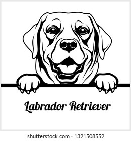 Labrador Retriever - Peeking Dogs - breed face head isolated on white - vector stock