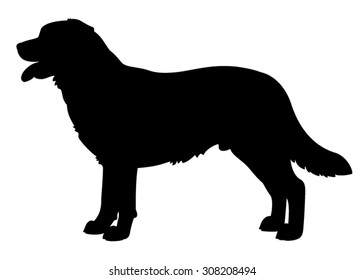 Labrador Retriever purebred dog standing in side view - vector silhouette isolated