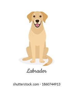 Labrador. Vector illustration of cute big yellow sitting dog in flat style. Isolated on white