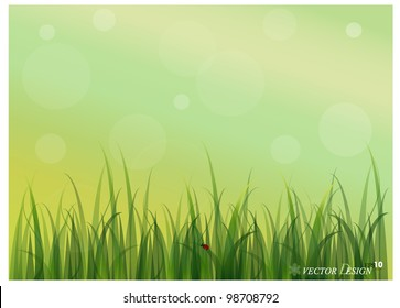 Lady bug and Fresh spring green grass background. Vector illustration.